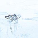 les immortelles by NordicBlackbird