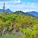 Vineyard with a view by Fay  Hughes