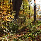 Fall Flare by Michael Kelly