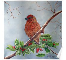 House Finch In Winter Poster