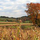 Autumn Fields in Pennsylvania by Geno Rugh