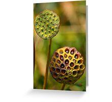 Lotus Seed Pods Greeting Card