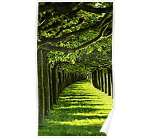 Green Allee Poster