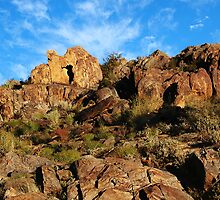 The Living Desert II by Paula McManus