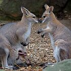 Wallaby Family by Alastair Faulkner