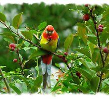 Rosey Apple by Gabrielle  Lees