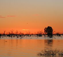 menindee lake sunset by nickwooz