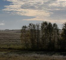 First frost in autumn (Autumn 2010) by Antanas
