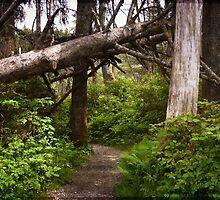 Talk a Walk Under the Tree by Lucinda Walter