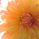 Dahlia in Peach by Jeri Garner
