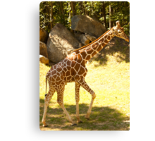 Young & tall! Canvas Print