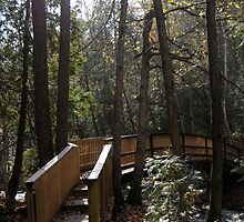 Bridge cutting into the Forest by paulto