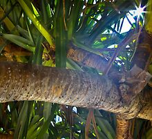 light filtered though pandanus by jmephotography