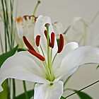 Lily Light by Robyn Williams
