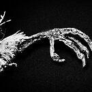 Bird Claw by Steve Lovegrove