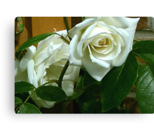 White Rose #1 Canvas Print