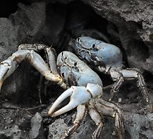 Two Blue Crabs by coomic