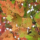 Leaves fall time in North Carolina by Misty Lackey