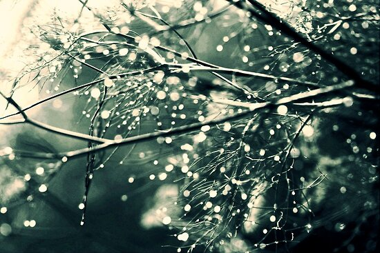 Light and Waterdrops by Shandopics