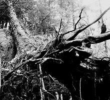 Beautiful Destruction - Hiking in Sooke by Delilah Rayne