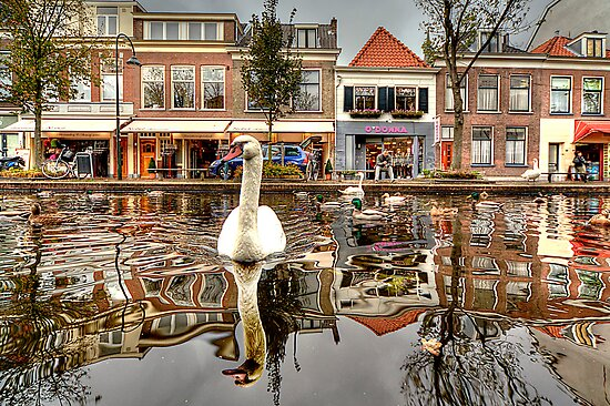 The world from a Swan's point of view by John44