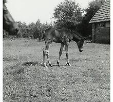 Oldskool Pony Named Rumba 1961 by AnnoNiem Anno1973
