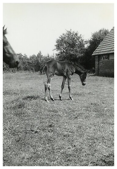 Oldskool Pony Named Rumba 1961 by AnnoNiem Anno1973