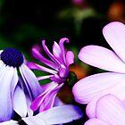Purple Dazed by ninadangelo