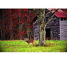 Buck by Ole Barn Photographic Print