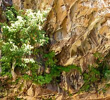 stunning rock wall - Katherine gorge by SUBI