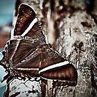 Monster Moth by Craig Hender