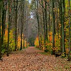 Fall in the Forest by Jo Nijenhuis