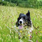 Indy in the wildflowers by Michael Haslam