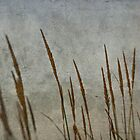 Fire Grass by Kevin Bergen