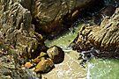 Lobo Grove by Andrew Simoni