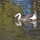 Monet's goose by inkedsandra