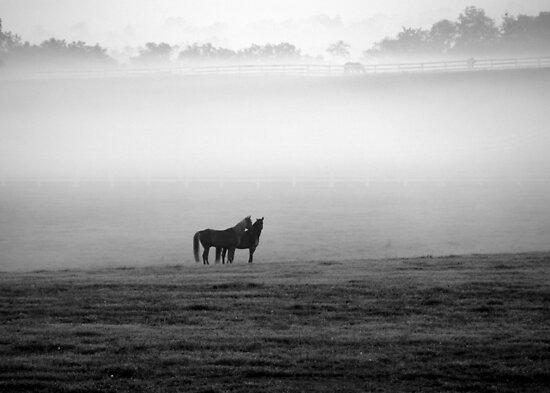 Horses in the Mist by John Carey