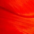 Red Tulip Dune by jeliza