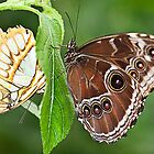 Two Butterflies on A Stem by Elaine123