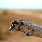 driftwood 2 by Kent Tisher