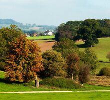 Autumn Scene ~ Escot, Devon by Susie Peek