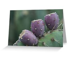 no. 1 cactus fruit Greeting Card