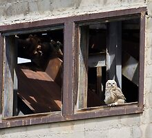 Owl at the Old Mine by Kim Barton