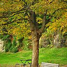 Seat in the Fall Time by Teresa Young