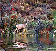 BUCK ON THE WATER by Charlene Aycock