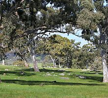 ~ The Beautiful Adelaide Hills ~ by LeeoPhotography