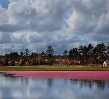 Cranberry harvest time by bettywiley