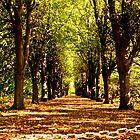 Autumn by imagic