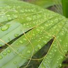 stilled raindrops by perggals
