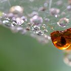 droplet grave by janko